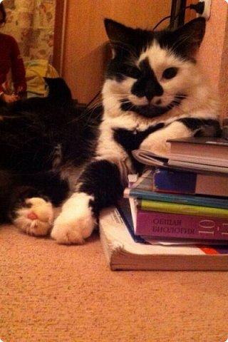Всем привет!!!! Знакомьтесь, мои кошки. Тося, Степа, Вася, Тиша. фото 35