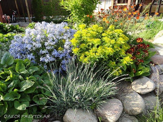 12. октября  а ещё столько красок в саду. Это моя мечта ,мои мысли , мои молитвы,моя радость -моя жизнь . С мужем до глубокой ночи работаем на участке,в этом году сделали пруд. и завели много новых зелёных питомцев. фото 3
