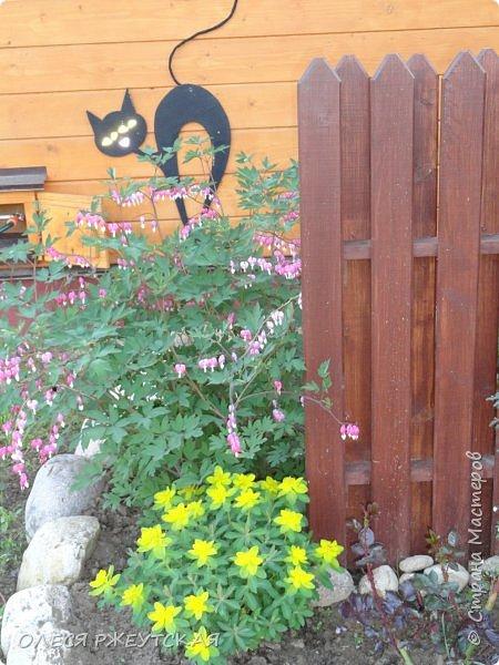 12. октября  а ещё столько красок в саду. Это моя мечта ,мои мысли , мои молитвы,моя радость -моя жизнь . С мужем до глубокой ночи работаем на участке,в этом году сделали пруд. и завели много новых зелёных питомцев. фото 6