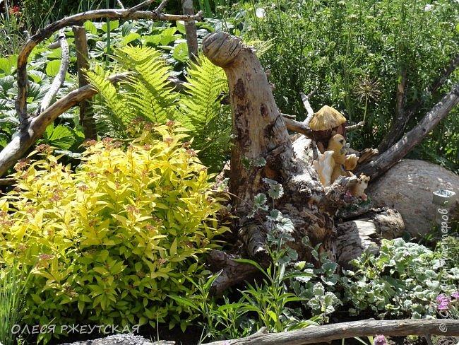 12. октября  а ещё столько красок в саду. Это моя мечта ,мои мысли , мои молитвы,моя радость -моя жизнь . С мужем до глубокой ночи работаем на участке,в этом году сделали пруд. и завели много новых зелёных питомцев. фото 9
