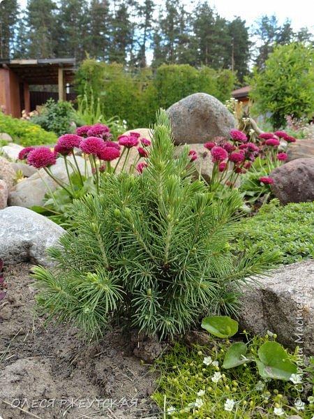 12. октября  а ещё столько красок в саду. Это моя мечта ,мои мысли , мои молитвы,моя радость -моя жизнь . С мужем до глубокой ночи работаем на участке,в этом году сделали пруд. и завели много новых зелёных питомцев. фото 10