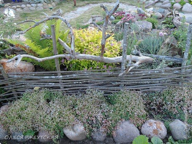 12. октября  а ещё столько красок в саду. Это моя мечта ,мои мысли , мои молитвы,моя радость -моя жизнь . С мужем до глубокой ночи работаем на участке,в этом году сделали пруд. и завели много новых зелёных питомцев. фото 12