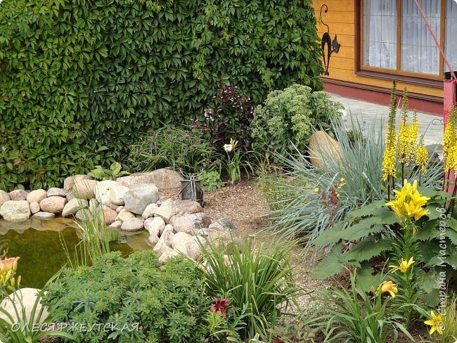 12. октября  а ещё столько красок в саду. Это моя мечта ,мои мысли , мои молитвы,моя радость -моя жизнь . С мужем до глубокой ночи работаем на участке,в этом году сделали пруд. и завели много новых зелёных питомцев. фото 20