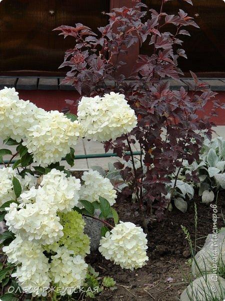 12. октября  а ещё столько красок в саду. Это моя мечта ,мои мысли , мои молитвы,моя радость -моя жизнь . С мужем до глубокой ночи работаем на участке,в этом году сделали пруд. и завели много новых зелёных питомцев. фото 21