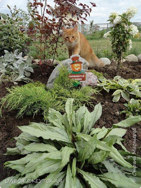 12. октября  а ещё столько красок в саду. Это моя мечта ,мои мысли , мои молитвы,моя радость -моя жизнь . С мужем до глубокой ночи работаем на участке,в этом году сделали пруд. и завели много новых зелёных питомцев. фото 22