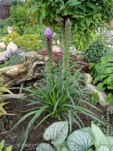 12. октября  а ещё столько красок в саду. Это моя мечта ,мои мысли , мои молитвы,моя радость -моя жизнь . С мужем до глубокой ночи работаем на участке,в этом году сделали пруд. и завели много новых зелёных питомцев. фото 23