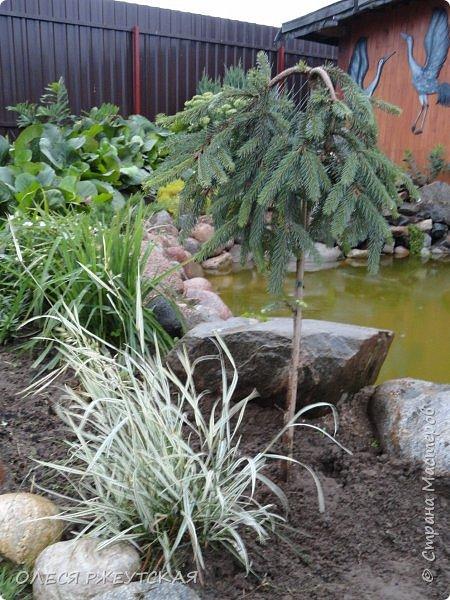 12. октября  а ещё столько красок в саду. Это моя мечта ,мои мысли , мои молитвы,моя радость -моя жизнь . С мужем до глубокой ночи работаем на участке,в этом году сделали пруд. и завели много новых зелёных питомцев. фото 26