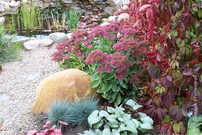 12. октября  а ещё столько красок в саду. Это моя мечта ,мои мысли , мои молитвы,моя радость -моя жизнь . С мужем до глубокой ночи работаем на участке,в этом году сделали пруд. и завели много новых зелёных питомцев. фото 1