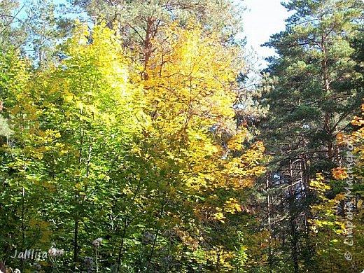 Всем своим гостям желаю хорошего настроения и приглашаю полюбоваться  красками осени моего края. фото 1