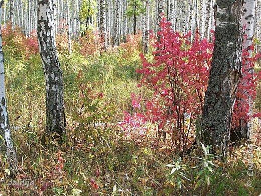 Всем своим гостям желаю хорошего настроения и приглашаю полюбоваться  красками осени моего края. фото 11