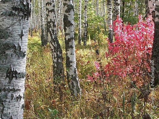 Всем своим гостям желаю хорошего настроения и приглашаю полюбоваться  красками осени моего края. фото 13