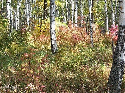 Всем своим гостям желаю хорошего настроения и приглашаю полюбоваться  красками осени моего края. фото 15
