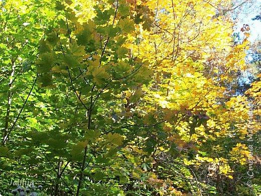 Всем своим гостям желаю хорошего настроения и приглашаю полюбоваться  красками осени моего края. фото 18