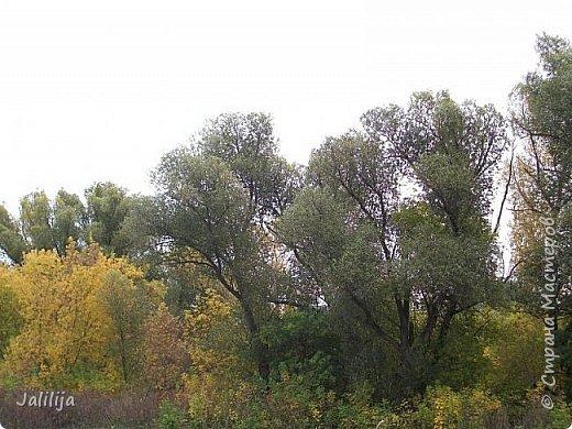 Всем своим гостям желаю хорошего настроения и приглашаю полюбоваться  красками осени моего края. фото 21