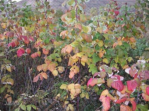 Всем своим гостям желаю хорошего настроения и приглашаю полюбоваться  красками осени моего края. фото 25