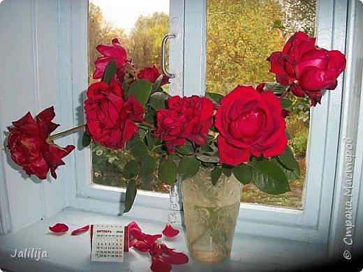 Всем своим гостям желаю хорошего настроения и приглашаю полюбоваться  красками осени моего края. фото 35