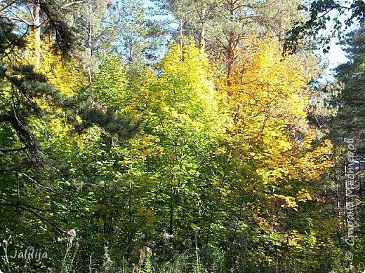Всем своим гостям желаю хорошего настроения и приглашаю полюбоваться  красками осени моего края. фото 2