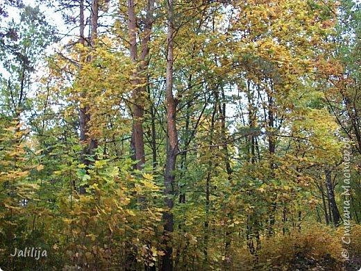 Всем своим гостям желаю хорошего настроения и приглашаю полюбоваться  красками осени моего края. фото 30