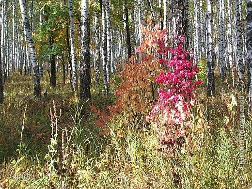 Всем своим гостям желаю хорошего настроения и приглашаю полюбоваться  красками осени моего края. фото 4