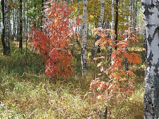 Всем своим гостям желаю хорошего настроения и приглашаю полюбоваться  красками осени моего края. фото 5