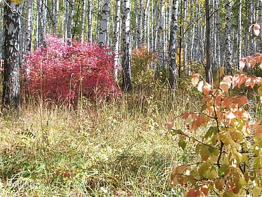 Всем своим гостям желаю хорошего настроения и приглашаю полюбоваться  красками осени моего края. фото 7