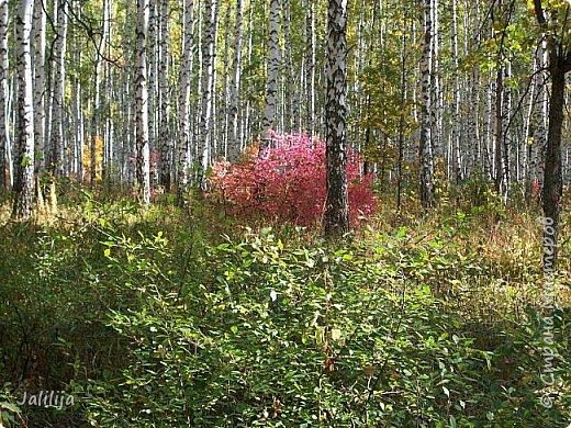 Всем своим гостям желаю хорошего настроения и приглашаю полюбоваться  красками осени моего края. фото 8