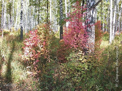 Всем своим гостям желаю хорошего настроения и приглашаю полюбоваться  красками осени моего края. фото 9