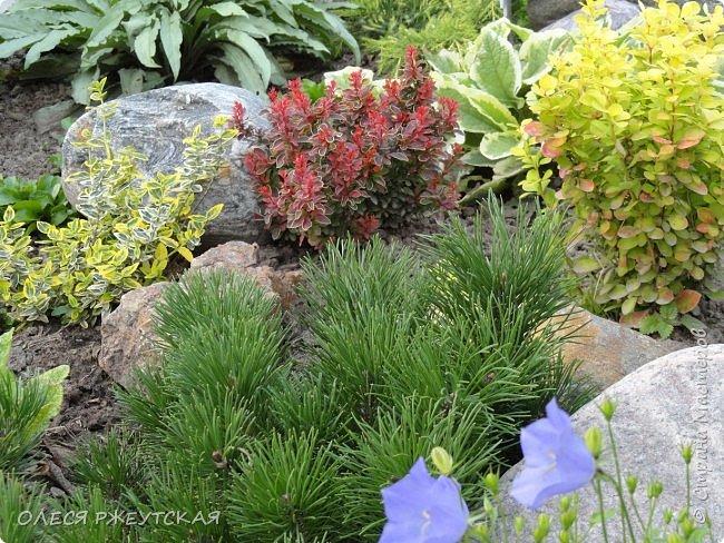 12. октября  а ещё столько красок в саду. Это моя мечта ,мои мысли , мои молитвы,моя радость -моя жизнь . С мужем до глубокой ночи работаем на участке,в этом году сделали пруд. и завели много новых зелёных питомцев. фото 28