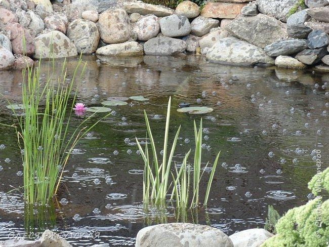 12. октября  а ещё столько красок в саду. Это моя мечта ,мои мысли , мои молитвы,моя радость -моя жизнь . С мужем до глубокой ночи работаем на участке,в этом году сделали пруд. и завели много новых зелёных питомцев. фото 32