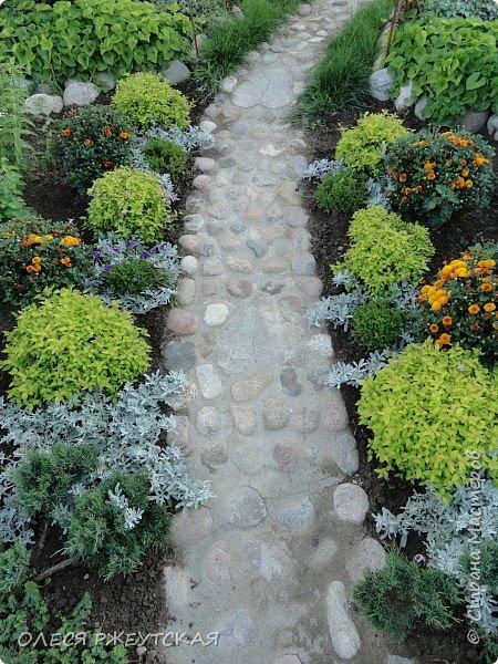 12. октября  а ещё столько красок в саду. Это моя мечта ,мои мысли , мои молитвы,моя радость -моя жизнь . С мужем до глубокой ночи работаем на участке,в этом году сделали пруд. и завели много новых зелёных питомцев. фото 34