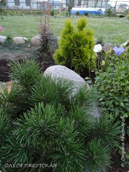 12. октября  а ещё столько красок в саду. Это моя мечта ,мои мысли , мои молитвы,моя радость -моя жизнь . С мужем до глубокой ночи работаем на участке,в этом году сделали пруд. и завели много новых зелёных питомцев. фото 36