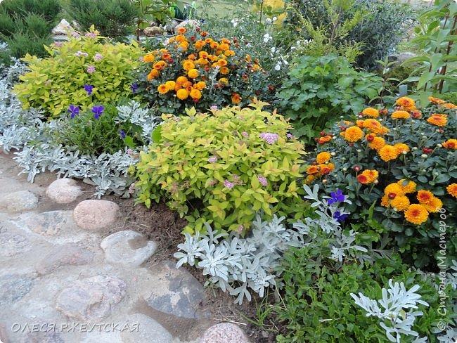 12. октября  а ещё столько красок в саду. Это моя мечта ,мои мысли , мои молитвы,моя радость -моя жизнь . С мужем до глубокой ночи работаем на участке,в этом году сделали пруд. и завели много новых зелёных питомцев. фото 37