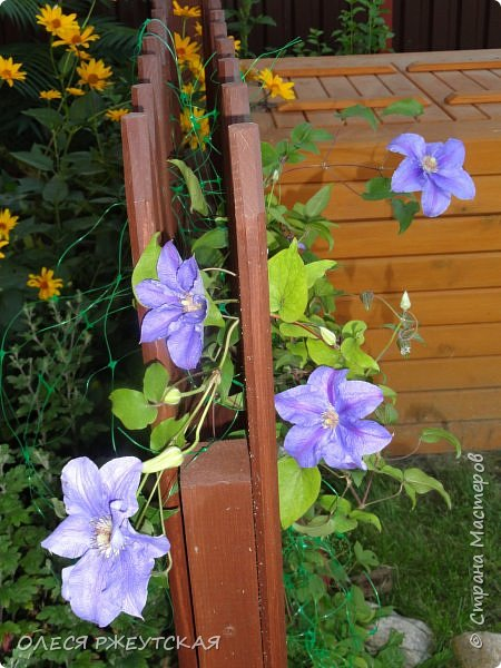 12. октября  а ещё столько красок в саду. Это моя мечта ,мои мысли , мои молитвы,моя радость -моя жизнь . С мужем до глубокой ночи работаем на участке,в этом году сделали пруд. и завели много новых зелёных питомцев. фото 38