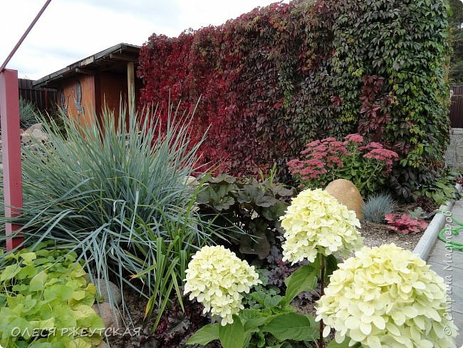 12. октября  а ещё столько красок в саду. Это моя мечта ,мои мысли , мои молитвы,моя радость -моя жизнь . С мужем до глубокой ночи работаем на участке,в этом году сделали пруд. и завели много новых зелёных питомцев. фото 43