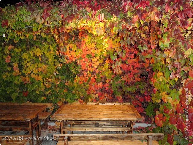 12. октября  а ещё столько красок в саду. Это моя мечта ,мои мысли , мои молитвы,моя радость -моя жизнь . С мужем до глубокой ночи работаем на участке,в этом году сделали пруд. и завели много новых зелёных питомцев. фото 44