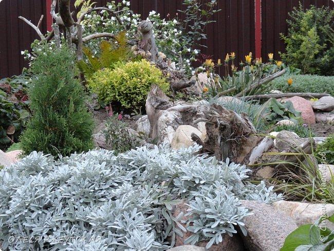 12. октября  а ещё столько красок в саду. Это моя мечта ,мои мысли , мои молитвы,моя радость -моя жизнь . С мужем до глубокой ночи работаем на участке,в этом году сделали пруд. и завели много новых зелёных питомцев. фото 47