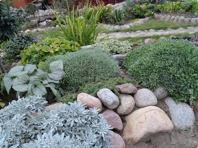 12. октября  а ещё столько красок в саду. Это моя мечта ,мои мысли , мои молитвы,моя радость -моя жизнь . С мужем до глубокой ночи работаем на участке,в этом году сделали пруд. и завели много новых зелёных питомцев. фото 48