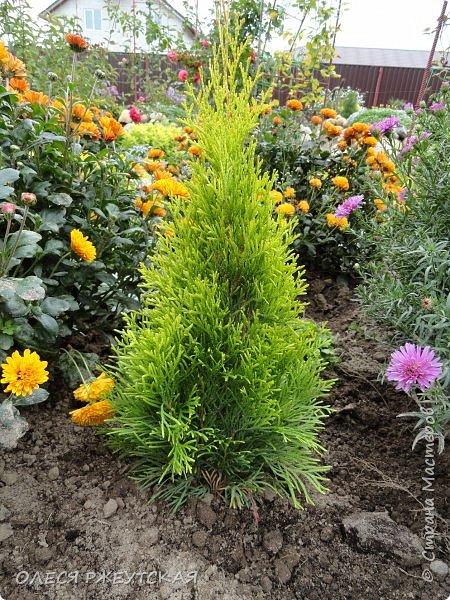 12. октября  а ещё столько красок в саду. Это моя мечта ,мои мысли , мои молитвы,моя радость -моя жизнь . С мужем до глубокой ночи работаем на участке,в этом году сделали пруд. и завели много новых зелёных питомцев. фото 50