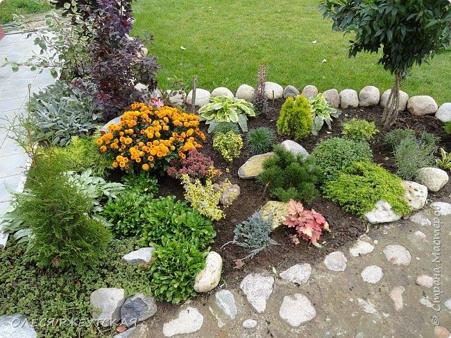 12. октября  а ещё столько красок в саду. Это моя мечта ,мои мысли , мои молитвы,моя радость -моя жизнь . С мужем до глубокой ночи работаем на участке,в этом году сделали пруд. и завели много новых зелёных питомцев. фото 54