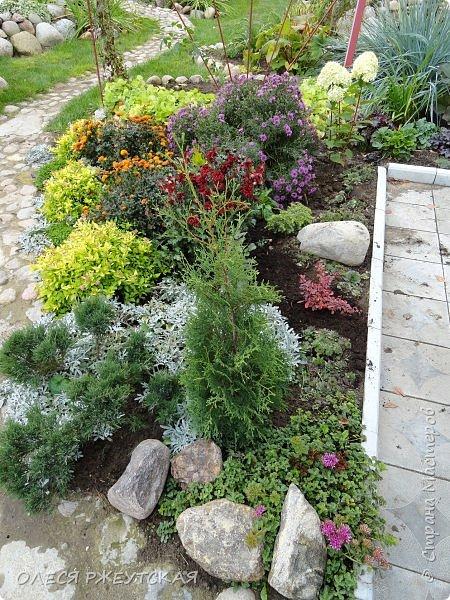 12. октября  а ещё столько красок в саду. Это моя мечта ,мои мысли , мои молитвы,моя радость -моя жизнь . С мужем до глубокой ночи работаем на участке,в этом году сделали пруд. и завели много новых зелёных питомцев. фото 55