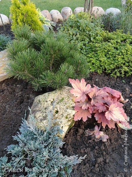 12. октября  а ещё столько красок в саду. Это моя мечта ,мои мысли , мои молитвы,моя радость -моя жизнь . С мужем до глубокой ночи работаем на участке,в этом году сделали пруд. и завели много новых зелёных питомцев. фото 56