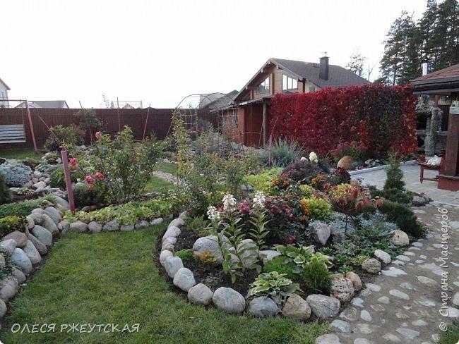 12. октября  а ещё столько красок в саду. Это моя мечта ,мои мысли , мои молитвы,моя радость -моя жизнь . С мужем до глубокой ночи работаем на участке,в этом году сделали пруд. и завели много новых зелёных питомцев. фото 59