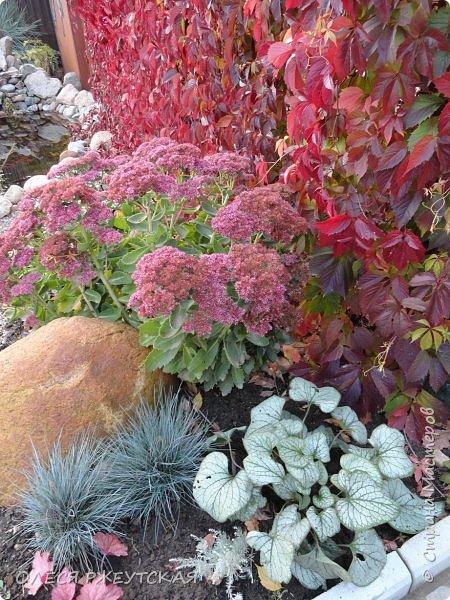 12. октября  а ещё столько красок в саду. Это моя мечта ,мои мысли , мои молитвы,моя радость -моя жизнь . С мужем до глубокой ночи работаем на участке,в этом году сделали пруд. и завели много новых зелёных питомцев. фото 62