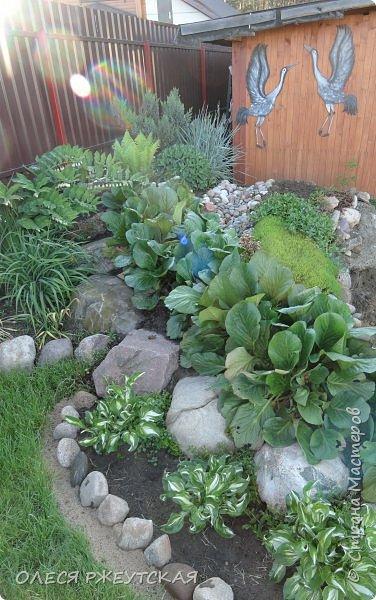 12. октября  а ещё столько красок в саду. Это моя мечта ,мои мысли , мои молитвы,моя радость -моя жизнь . С мужем до глубокой ночи работаем на участке,в этом году сделали пруд. и завели много новых зелёных питомцев. фото 7