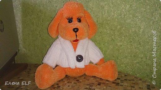 Рыженькая собачка Лизонька фото 5