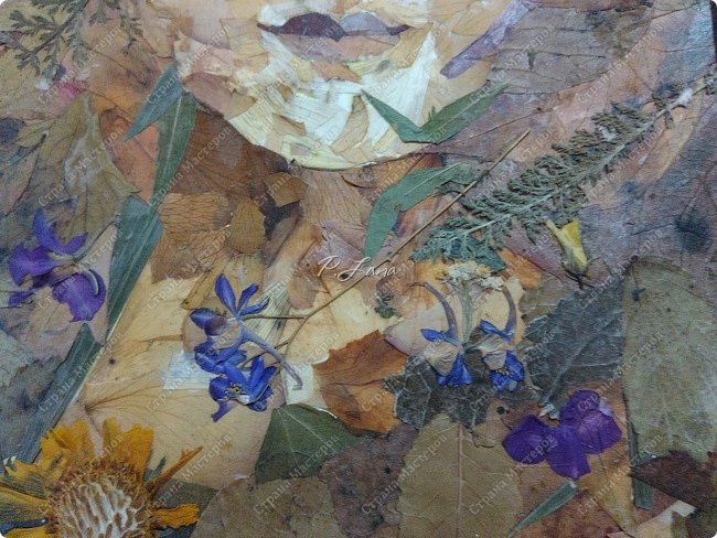 Леди Осень в платье октября- Буйство красок с лёгкой позолотой- Безрассудно-праздничный наряд. В нём танцует леди беззаботно.                           Алла Зенина. Здравствуйте,друзья!Сегодня хочу показать вам свою новую работу в технике Ошибана . Картина сделана из засушенных листьев и цветов. фото 3