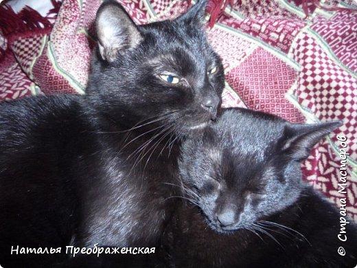 Дорогие соседи! Почитала ваши замечательные посты про кошек: http://stranamasterov.ru/node/976335 http://stranamasterov.ru/node/1016546?c=favusers http://stranamasterov.ru/node/792513 http://stranamasterov.ru/node/316026 http://stranamasterov.ru/node/99824   И решила рассказать историю про кошку в моей жизни.  фото 1