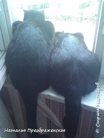 Дорогие соседи! Почитала ваши замечательные посты про кошек: http://stranamasterov.ru/node/976335 http://stranamasterov.ru/node/1016546?c=favusers http://stranamasterov.ru/node/792513 http://stranamasterov.ru/node/316026 http://stranamasterov.ru/node/99824   И решила рассказать историю про кошку в моей жизни.  фото 4