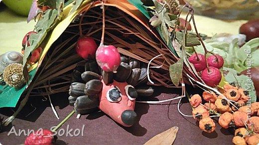 Запасливые ёжики)))) фото 1