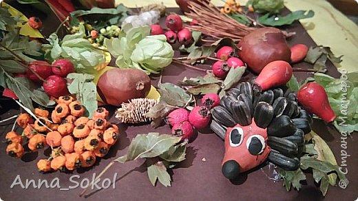 Запасливые ёжики)))) фото 3